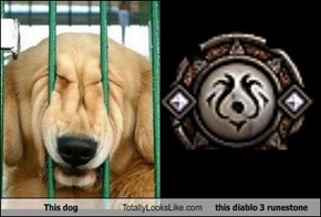 This Dog Totally Looks Like This Diablo 3 Runestone