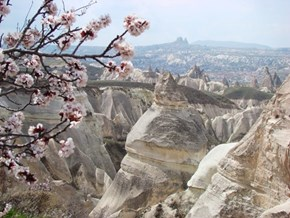 Soft Petals, Hard Stones, Rose Valley, Cappadocia, Turkey