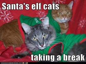 Santa's elf cats  taking a break