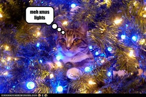 meh xmas lights