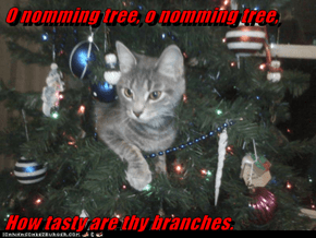 O nomming tree, o nomming tree,  How tasty are thy branches.