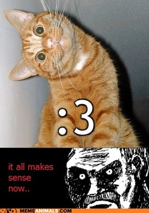 The Cat Face Emoticon Explained