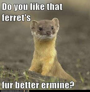 Do you like that ferret's  fur better ermine?