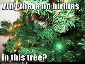Why there no birdies  in this tree?