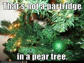That's not a partridge  in a pear tree.