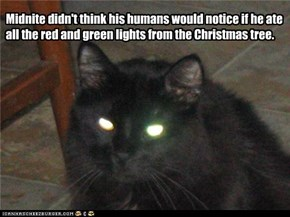 Midnite didn't think his humans would notice if he ate all the red and green lights from the Christmas tree.