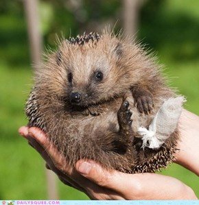 Borked Hedgie is Borked