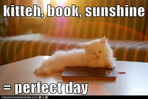 kitteh, book, sunshine  = perfect day