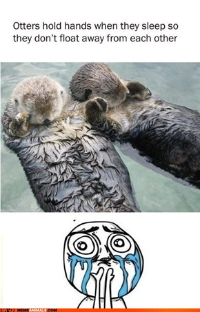 Death By Cuteness: Otter Edition