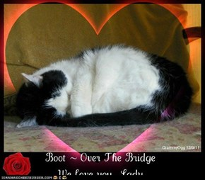 For our dear Cheezpeep Pootlbry who had to help Boot across the Bridge today.