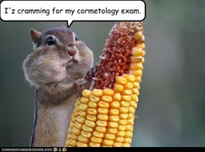 I'z cramming for my cormetology exam.