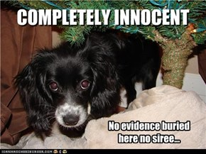 COMPLETELY INNOCENT