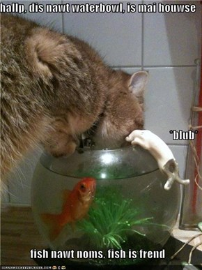 hallp, dis nawt waterbowl, is mai houwse *blub* fish nawt noms, fish is frend