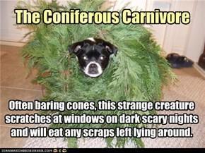 The Coniferous Carnivore
