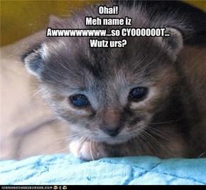 Ohai! Meh name iz Awwwwwwwww...so CYOOOOOOT... Wutz urs?