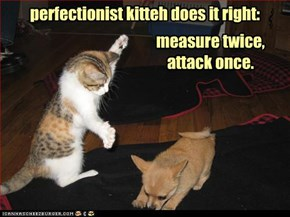 perfectionist kitteh does it right: