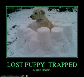 LOST PUPPY  TRAPPED