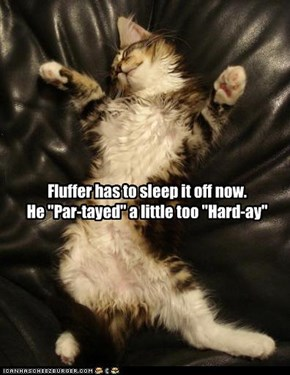 "Fluffer has to sleep it off now. He ""Par-tayed"" a little too ""Hard-ay"""