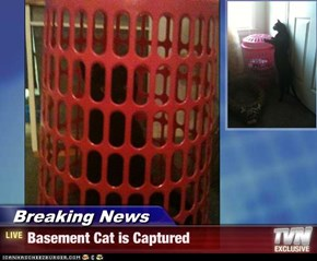 Breaking News - Basement Cat is Captured