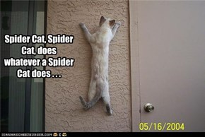 Spider Cat, Spider Cat, does whatever a Spider Cat does . . .
