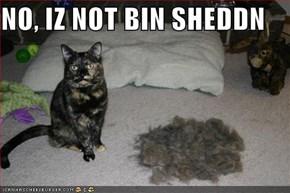 NO, IZ NOT BIN SHEDDN