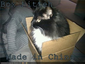 Box Kitteh  Made in China