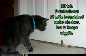Kitteh fascinashunz: It mite b sqwished under da dorr,  but it keeps wigglin.