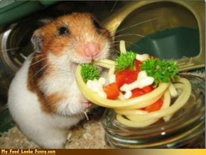 Funny Food Photos - Hamster Loves Spaghetti