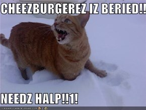 CHEEZBURGEREZ IZ BERIED!!1!  NEEDZ HALP!!1!