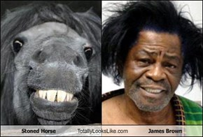 Stoned Horse Totally Looks Like James Brown