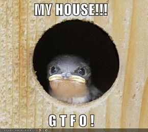 MY HOUSE!!!  G T F O !