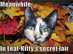 Meanwhile...  In Leaf-Kitty's secret lair