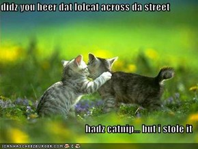 didz you heer dat lolcat across da street  hadz catnip... but i stole it