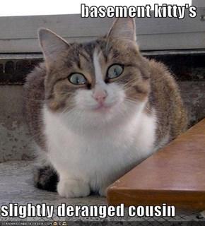 basement kitty's  slightly deranged cousin