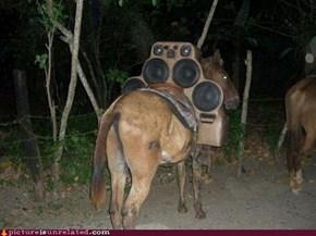 Horse Beat