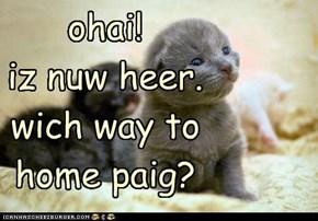 ohai! iz nuw heer. wich way to home paig?