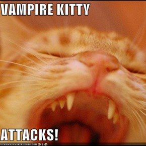 VAMPIRE KITTY  ATTACKS!