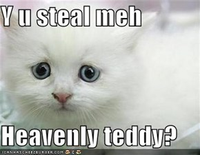 Y u steal meh  Heavenly teddy?