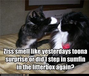 Ziss smell like yesterdays toona surprise or did I step in sumfin in the litterbox again?