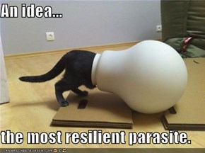 An idea...  the most resilient parasite.