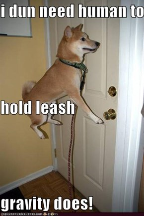 i dun need human to hold leash gravity does!