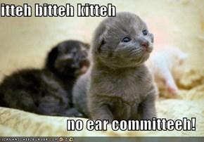 itteh bitteh kitteh  no ear committeeh!