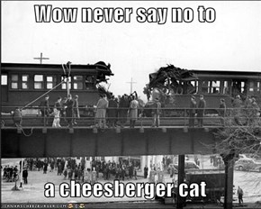 Wow never say no to   a cheesberger cat