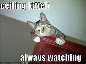 ceiling kitteh  always watching