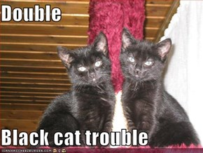 Double  Black cat trouble