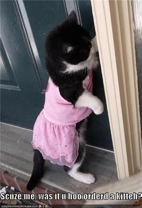 Scuze me, was it u hoo orderd a kitteh?