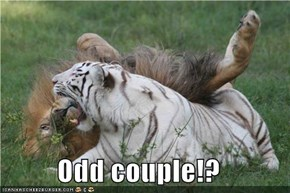Odd couple!?