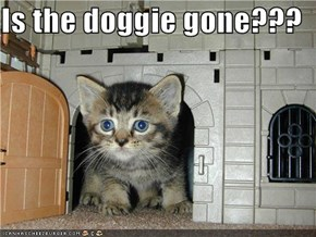Is the doggie gone???