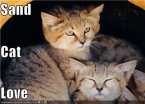 Sand  Cat Love