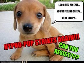 HYPNO-PUP STRIKES AGAIN!!!